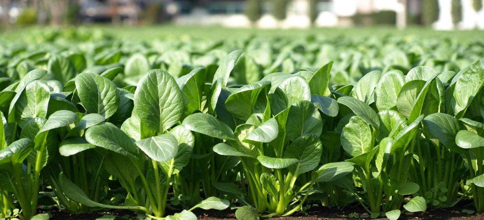 2022年の生産緑地法問題で不動産価格暴落!?不動産投資は終焉か?